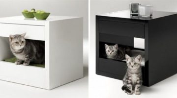 Cat Furniture - Pamper Your Kitty in Style