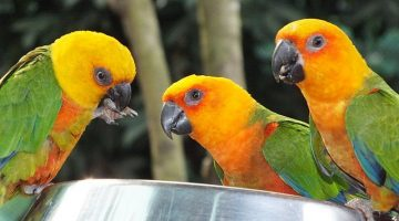 The Main Benefits of Having a Parrot as A Pet